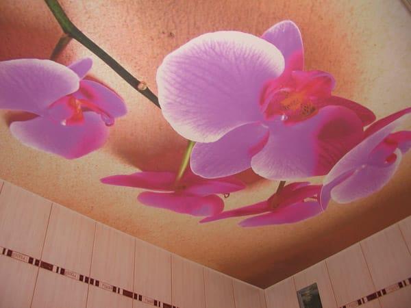 Натяжные потолки матовые с фотопечатью орхидея