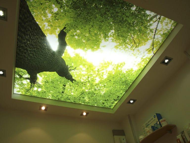 Натяжные потолки фотопечать листва с подсветкой